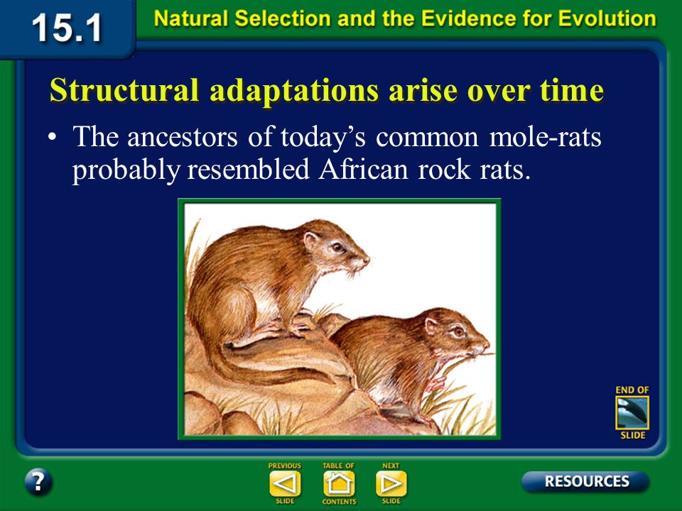 Section 15.1 Summary – pages 393-403 Structural adaptations arise over time According to Darwins theory, adaptations in species develop over many gene
