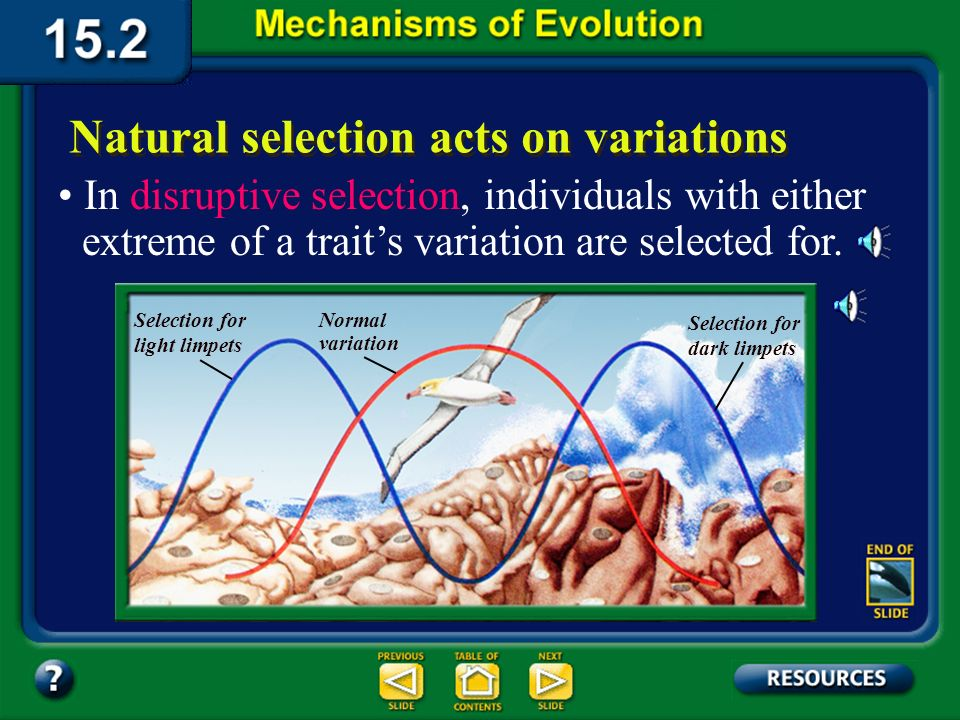 Section 15.2 Summary– pages 404-413 Natural selection acts on variations Directional selection occurs when natural selection favors one of the extreme