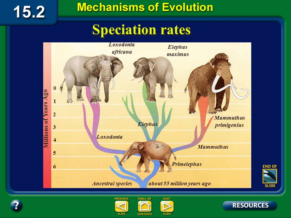 Section 15.2 Summary– pages 404-413 Speciation rates In 1972, Niles Eldredge and Stephen J. Gould proposed a different hypothesis known as punctuated