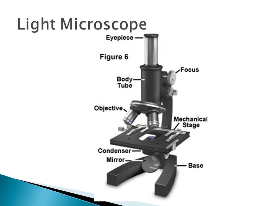 Eyepiece – contains magnifying lens Arm – supports the body tube Stage – supports the slide being observed Body Tube – Maintains the proper distance between the eyepiece and the objectives Focus- Fine and course adjustments move the body tube to focus the image Objective – Provides magnification.