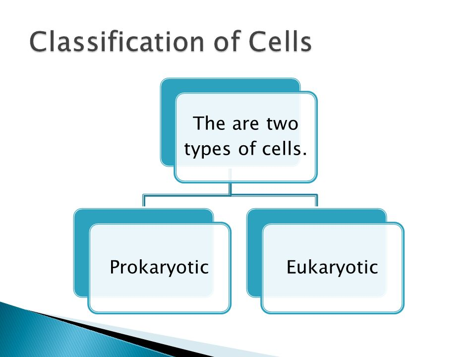 The are two types of cells. ProkaryoticEukaryotic