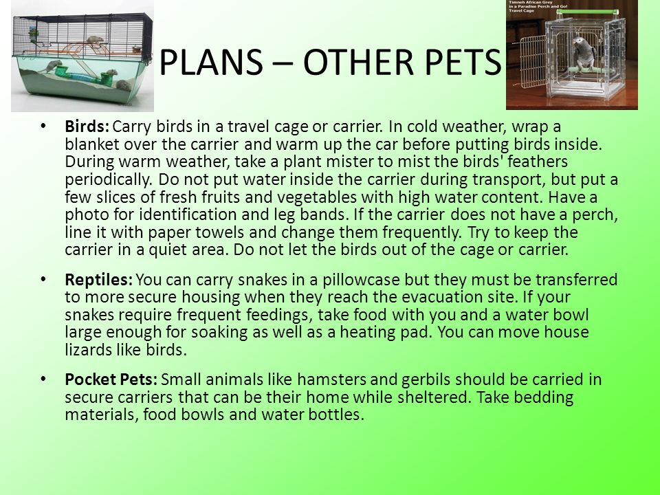 PLANS – OTHER PETS Birds: Carry birds in a travel cage or carrier. In cold weather, wrap a blanket over the carrier and warm up the car before putting