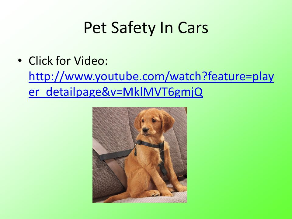 Pet Safety In Cars Click for Video: http://www.youtube.com/watch?feature=play er_detailpage&v=MklMVT6gmjQ http://www.youtube.com/watch?feature=play er