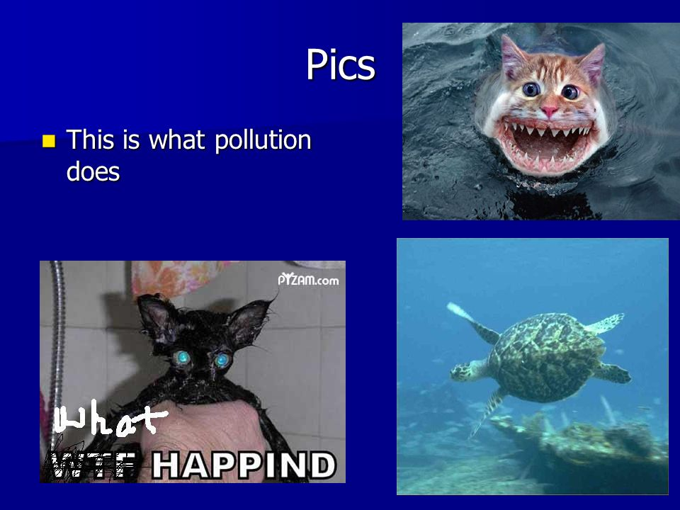 Pics This is what pollution does This is what pollution does