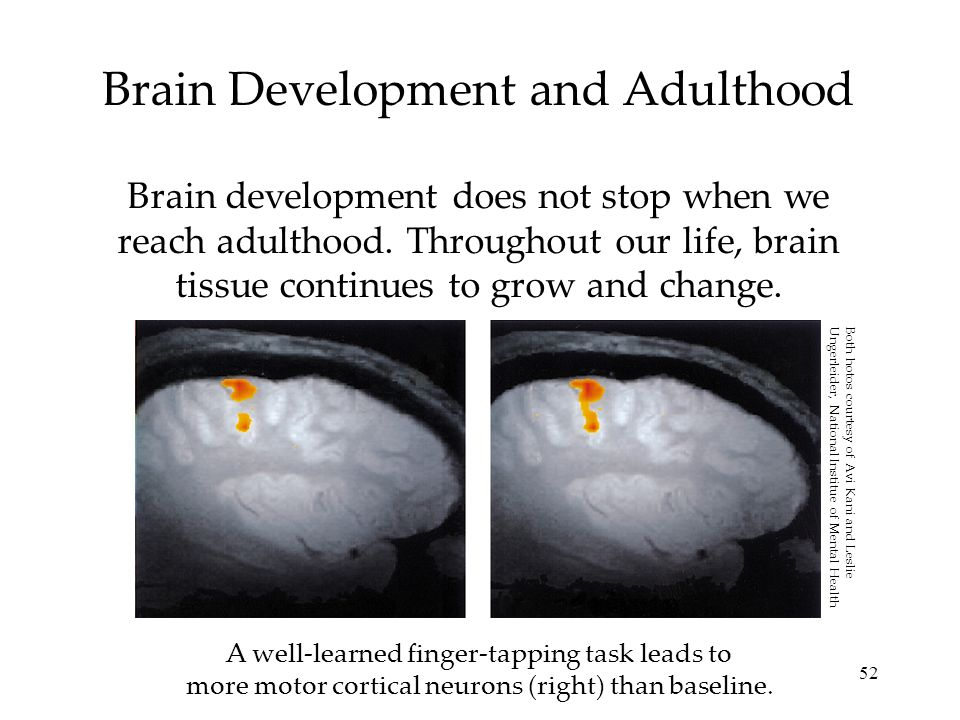 52 Brain Development and Adulthood Brain development does not stop when we reach adulthood. Throughout our life, brain tissue continues to grow and ch