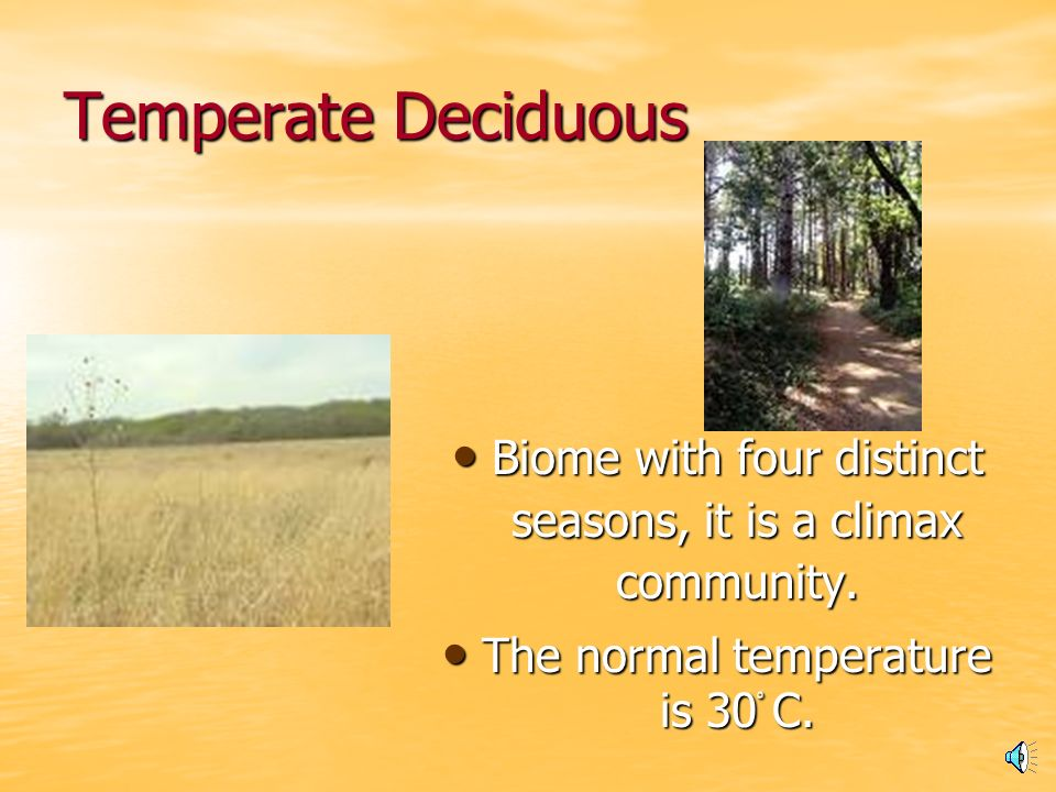Temperate Deciduous Forest Do you know a lot about the forest.