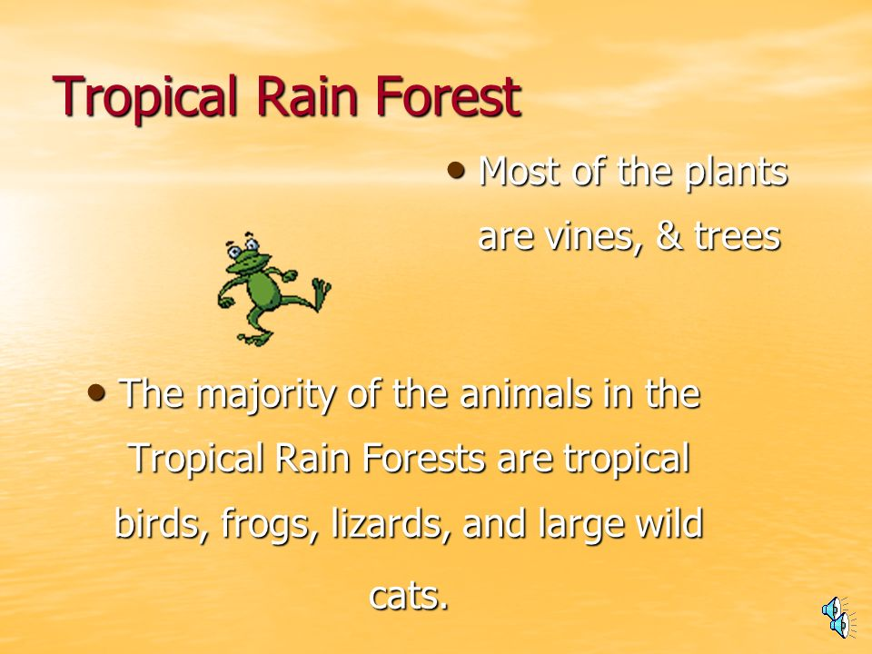 Tropical Rain Forest These forest are found in South America, & the British Isles.