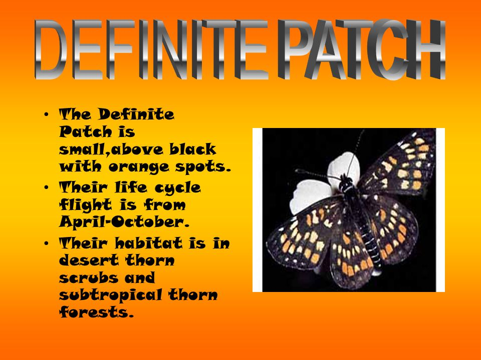 *The Monarch Butterfly is known by scientists as Danuas Plexippus which in literarlly means Sleepy Transformation.