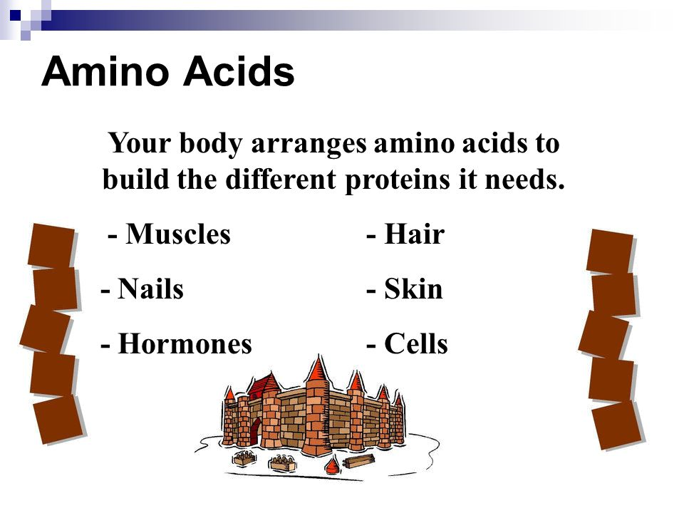 Amino Acids Your body arranges amino acids to build the different proteins it needs. - Muscles- Hair - Nails- Skin - Hormones- Cells