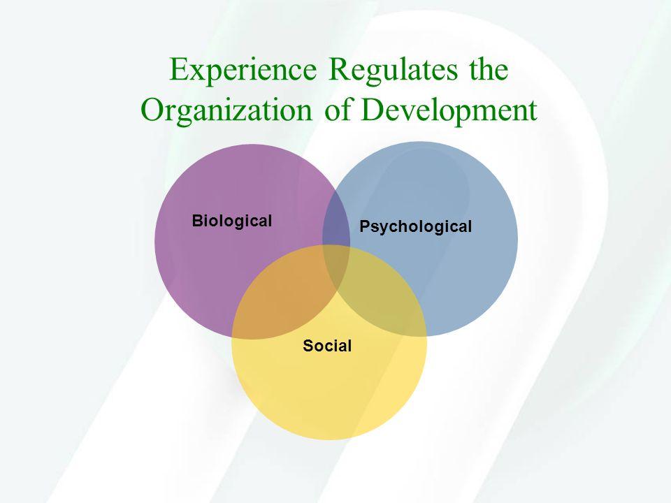 Experience Regulates the Organization of Development Biological Psychological Social