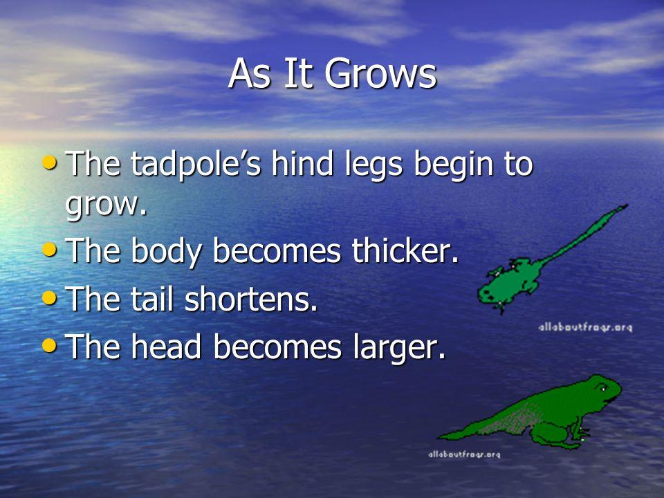 A frog begins life as a tadpole. A tadpole has no legs. A tadpole has no legs. A tadpole has a tail. A tadpole has a tail. A tadpole looks like a smal