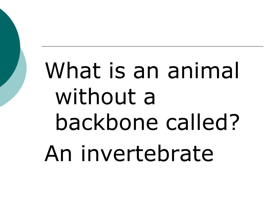 An invertebrate