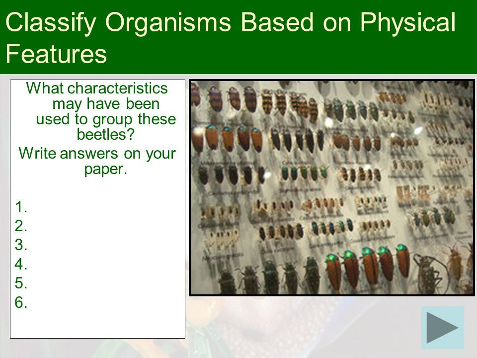 What characteristics may have been used to group these beetles? Write answers on your paper. 1. 2. 3. 4. 5. 6. Classify Organisms Based on Physical Fe