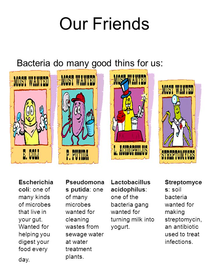 Our Friends Bacteria do many good thins for us: Escherichia coli: one of many kinds of microbes that live in your gut. Wanted for helping you digest y