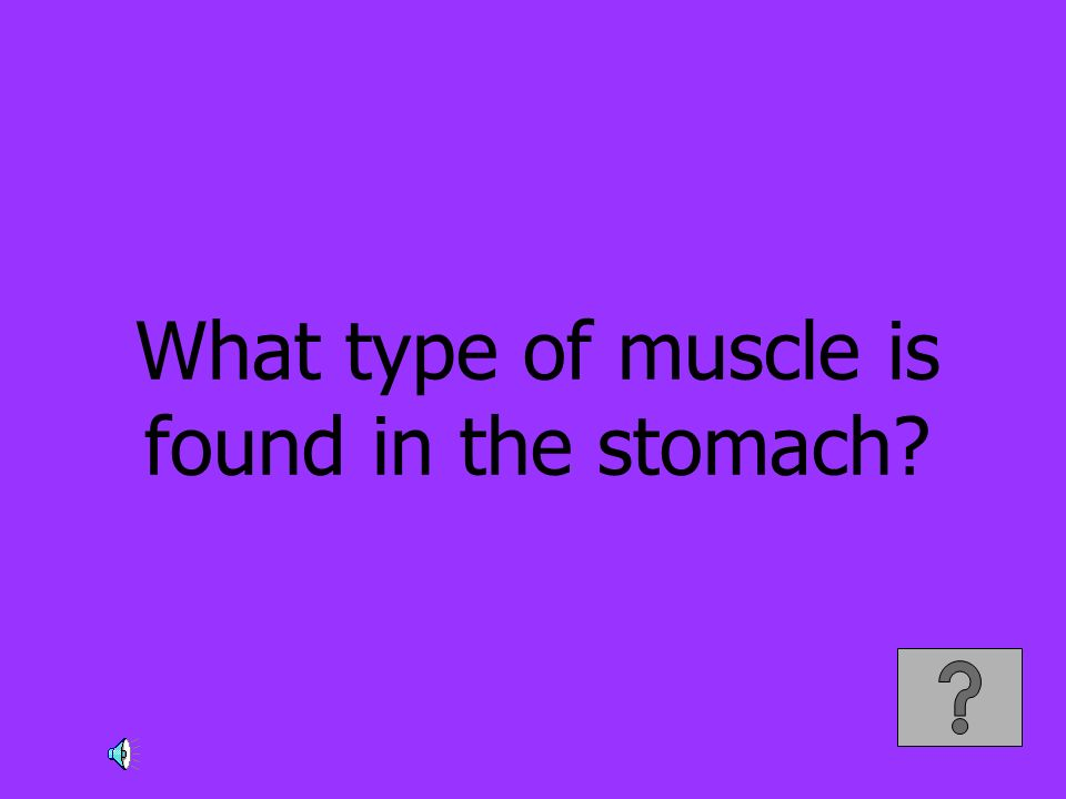 What type of muscle is found in the stomach?