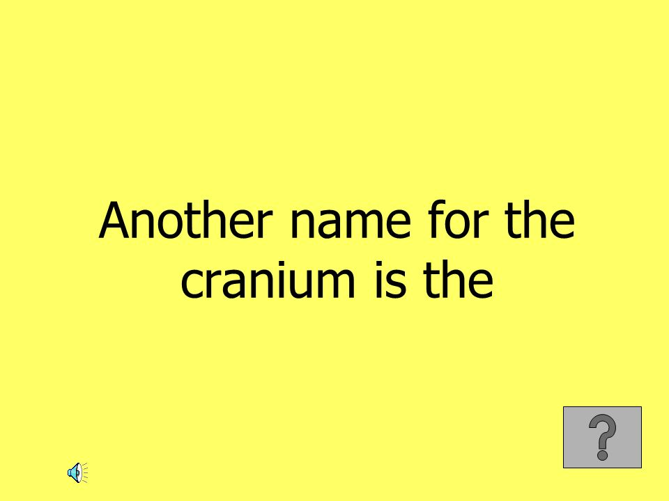 Another name for the cranium is the
