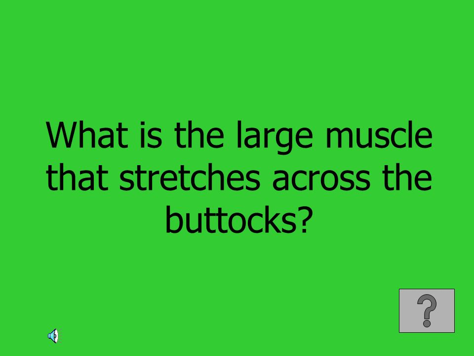What is the large muscle that stretches across the buttocks?