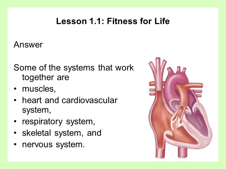 Lesson 1.1: Fitness for Life Answer Some of the systems that work together are muscles, heart and cardiovascular system, respiratory system, skeletal