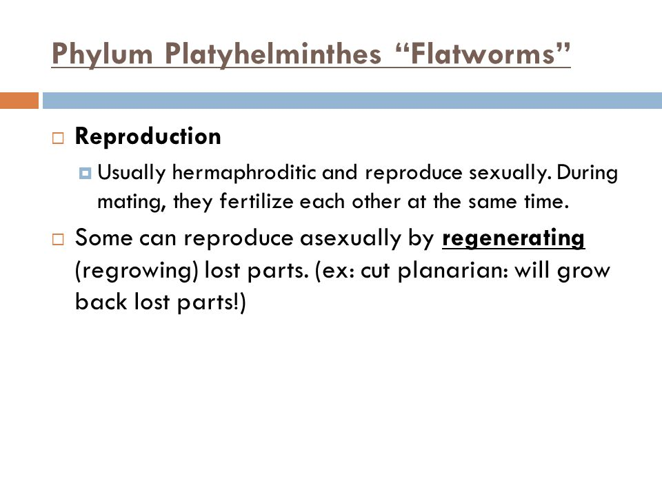 Phylum Platyhelminthes Flatworms Reproduction Usually hermaphroditic and reproduce sexually. During mating, they fertilize each other at the same time