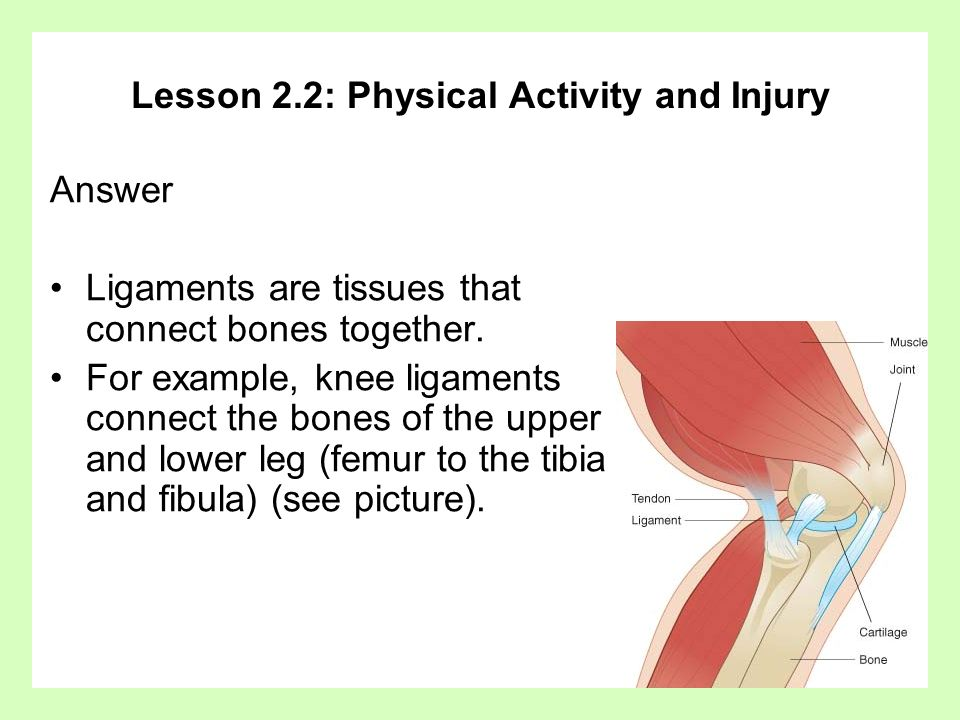 Lesson 2.2: Physical Activity and Injury Answer Ligaments are tissues that connect bones together. For example, knee ligaments connect the bones of th