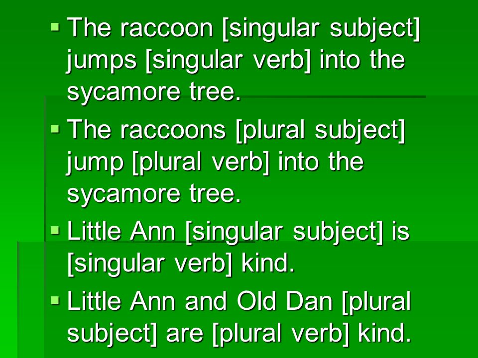 The raccoon [singular subject] jumps [singular verb] into the sycamore tree.