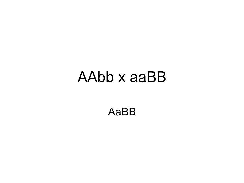 AAbb x aaBB AaBB