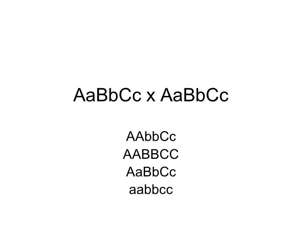 AaBbCc x AaBbCc AAbbCc AABBCC AaBbCc aabbcc