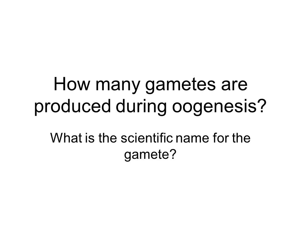 How many gametes are produced during oogenesis What is the scientific name for the gamete