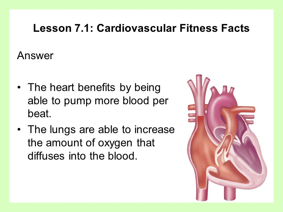 Lesson 7.1: Cardiovascular Fitness Facts Answer The heart benefits by being able to pump more blood per beat. The lungs are able to increase the amoun