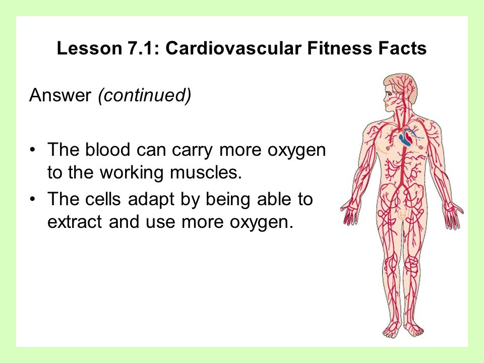 Lesson 7.1: Cardiovascular Fitness Facts Answer (continued) The blood can carry more oxygen to the working muscles. The cells adapt by being able to e