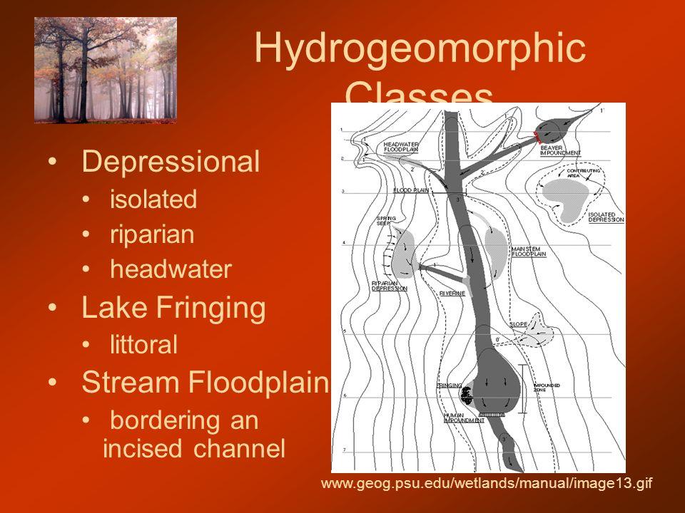 Hydrogeomorphic Classes Depressional isolated riparian headwater Lake Fringing littoral Stream Floodplain bordering an incised channel www.geog.psu.edu/wetlands/manual/image13.gif
