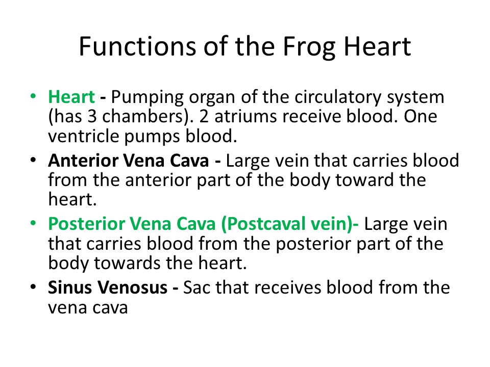 Functions of the Frog Heart Heart - Pumping organ of the circulatory system (has 3 chambers). 2 atriums receive blood. One ventricle pumps blood. Ante