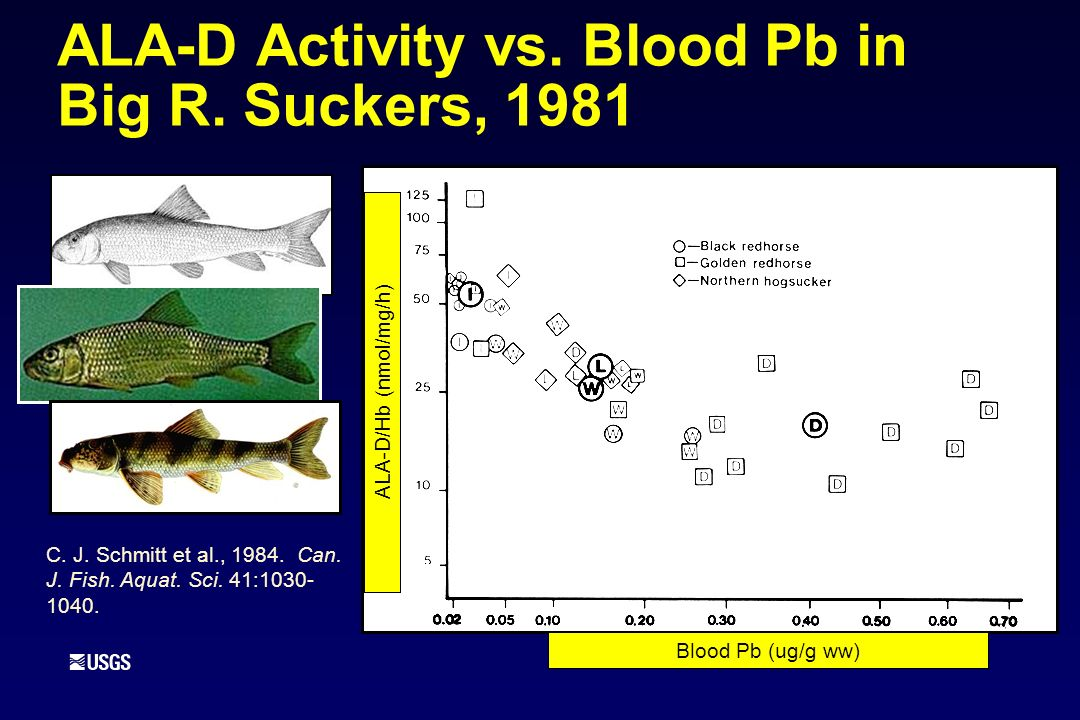ALA-D Activity vs. Blood Pb in Big R. Suckers, 1981 C. J. Schmitt et al., 1984. Can. J. Fish. Aquat. Sci. 41:1030- 1040. Blood Pb (ug/g ww) ALA-D/Hb (