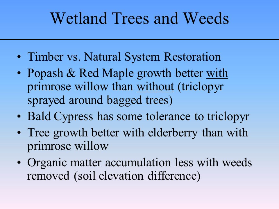 Wetland Trees and Weeds Timber vs.