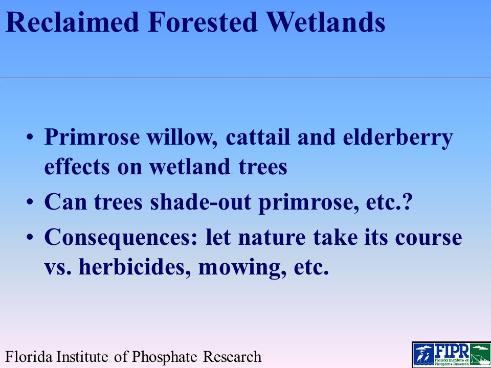 Forested Wetlands Dealing with Primrose Willow and Cattail Florida Institute of Phosphate Research Wetland trees grow in spite of these nuisance species Trees can shade them out Weed control efforts may damage trees Early canopy closure (trees + primrose willow) enhances understory