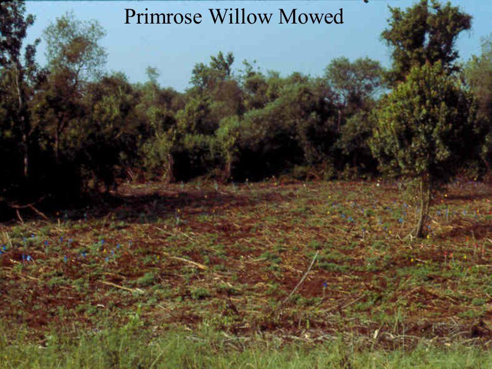 Primrose willow removed: sun-loving weeds