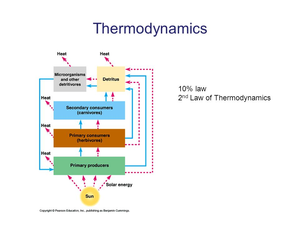 Thermodynamics 10% law 2 nd Law of Thermodynamics