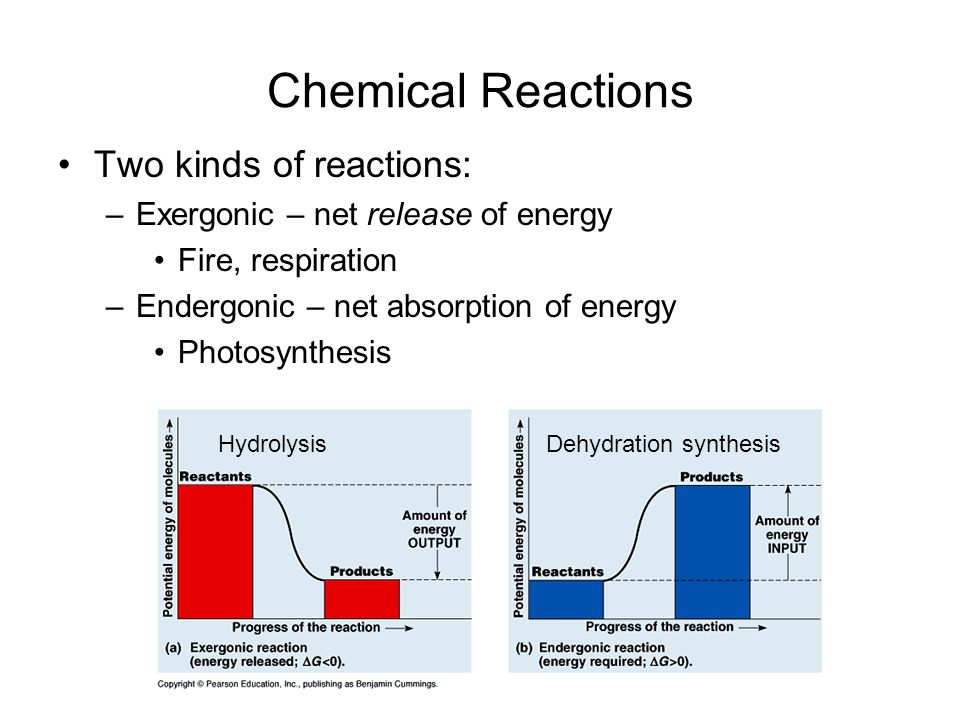 Chemical Reactions Two kinds of reactions: –Exergonic – net release of energy Fire, respiration –Endergonic – net absorption of energy Photosynthesis