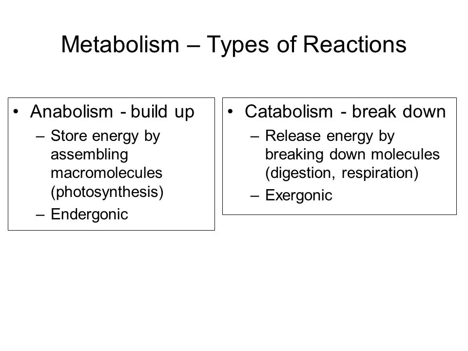 Metabolism – Types of Reactions Anabolism - build up –Store energy by assembling macromolecules (photosynthesis) –Endergonic Catabolism - break down –