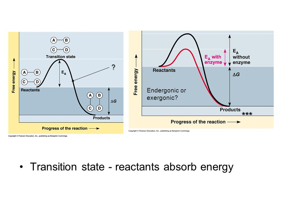 Transition state - reactants absorb energy *** ? Endergonic or exergonic?