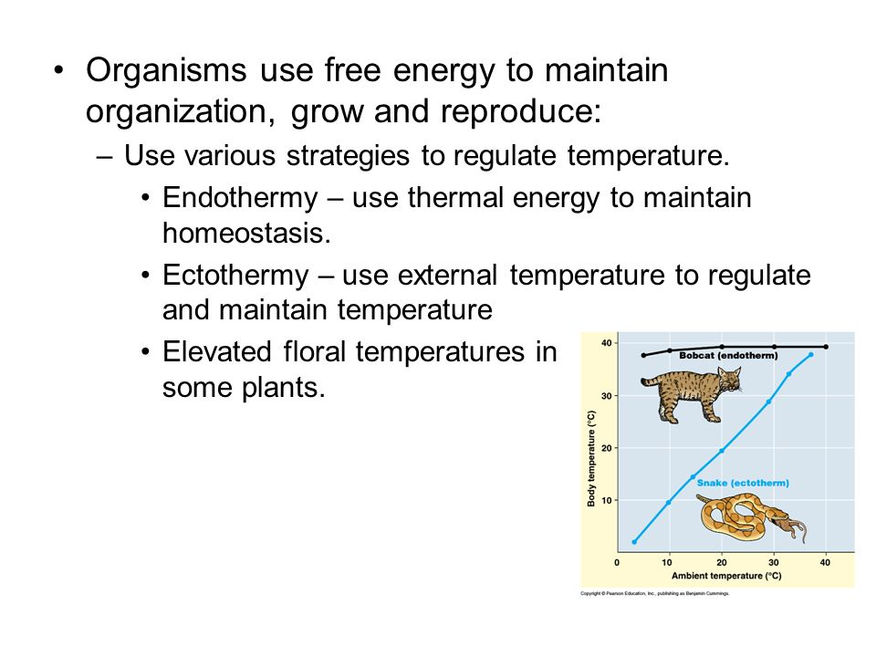Organisms use free energy to maintain organization, grow and reproduce: –Use various strategies to regulate temperature. Endothermy – use thermal ener