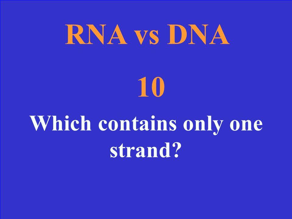 RNA vs DNA RRR… Replicate The two Ts Codon Bingo ATCG 10 Point 20 Points 30 Points 40 Points 50 Points 10 Point 20 Points 30 Points 40 Points 50 Point