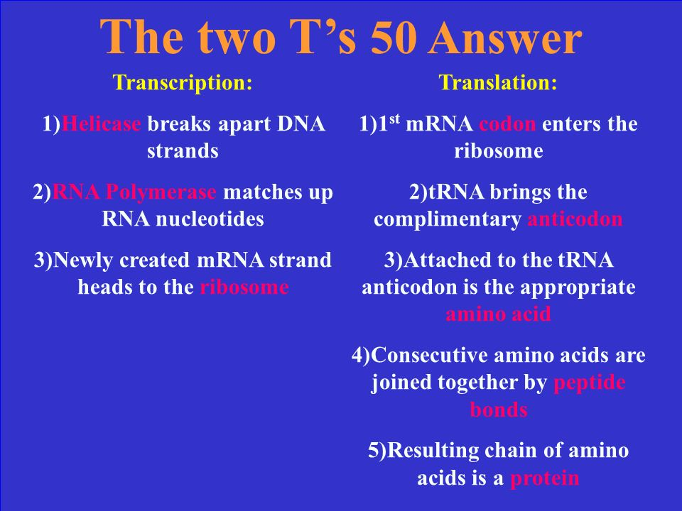 The two Ts 50 Explain: three steps of Transcription (use the enzymes) five steps of Translation (how does the whole process happen )