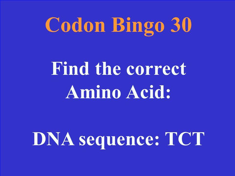 Codon Bingo 20 Answer STOP codon