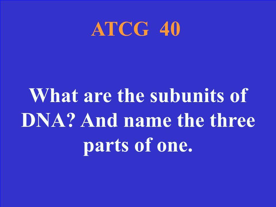 ATCG 30 Answer A = Adenine T = Thymine C = Cytosine G = Guanine