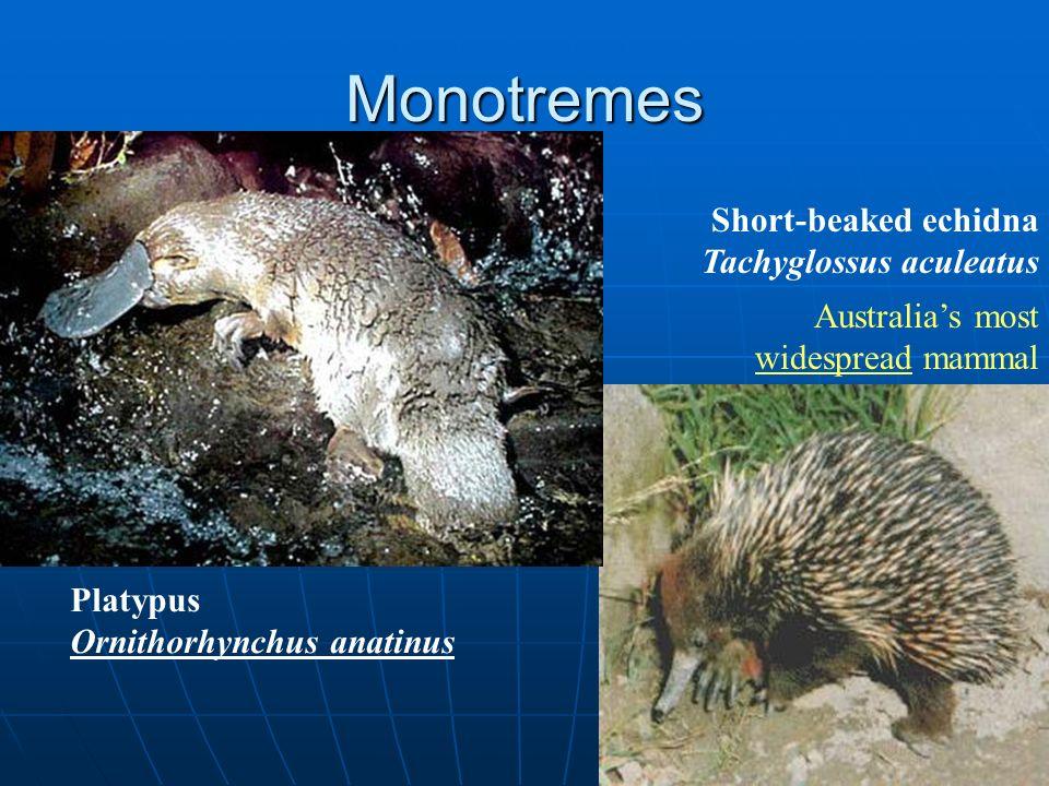 Monotremes – 1)Lay eggs 2)Have a cloaca 3)No nipples