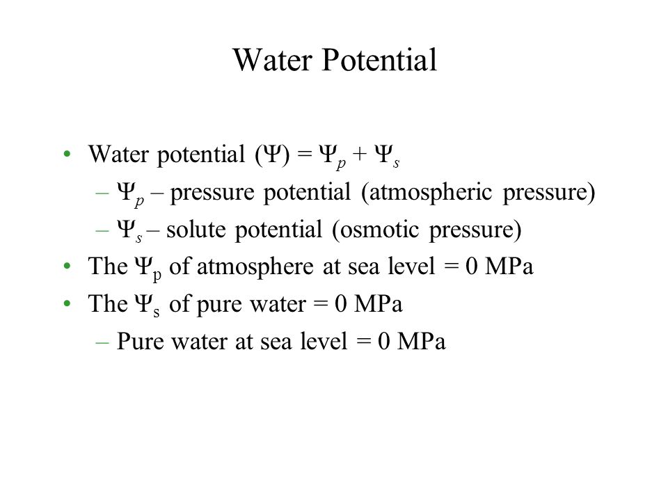 Water Potential Water potential (Ψ) = Ψ p + Ψ s –Ψ p – pressure potential (atmospheric pressure) –Ψ s – solute potential (osmotic pressure) The Ψ p of