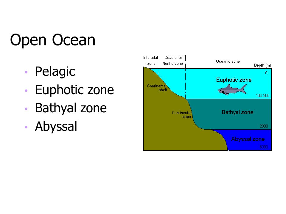 Open Ocean Pelagic Euphotic zone Bathyal zone Abyssal