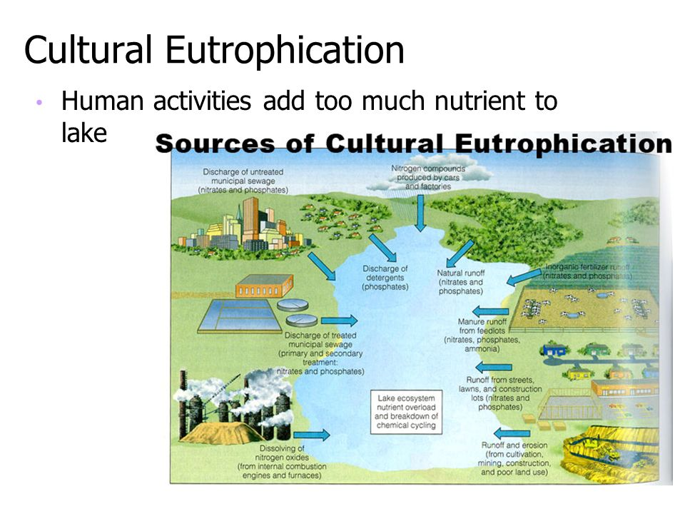 Cultural Eutrophication Human activities add too much nutrient to lake