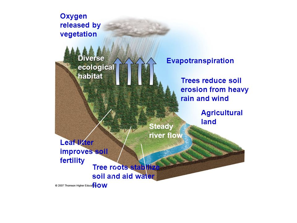 Oxygen released by vegetation Diverse ecological habitat Evapotranspiration Trees reduce soil erosion from heavy rain and wind Agricultural land Stead